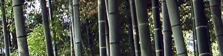 meditation guide - bamboo grove